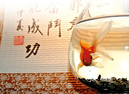 Количество рыбок по феншую.  Фотка из темы Пуховики