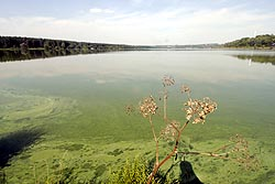 В Калужском водохранилище вода позеленела