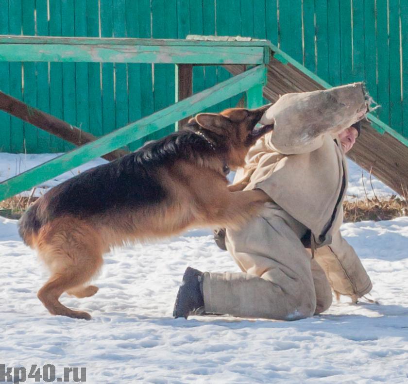 чем ловят собак