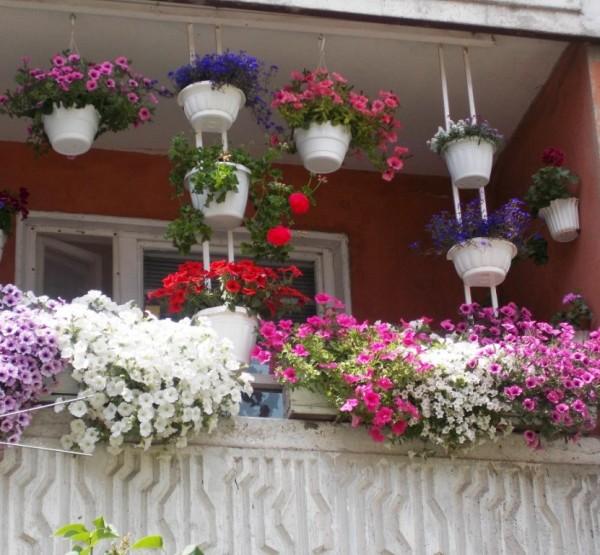 В калуге выбрали самые красивые дворы - благоустройство - но.
