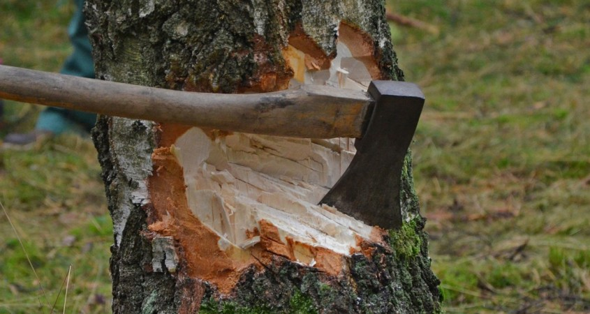Мигрант нелегально нарубил деревьев на млн руб.