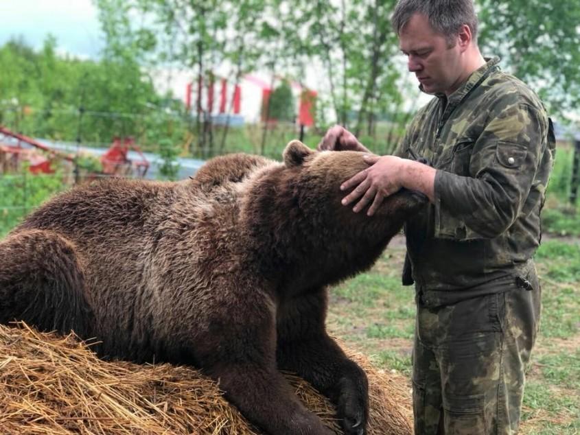 Медведь Мансур Picture-845h