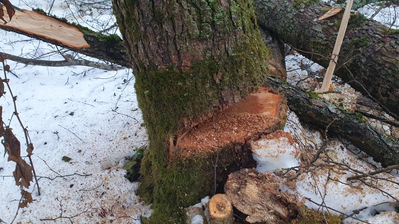 Калуга упало дерево погиб лесоруб Следственный комитет
